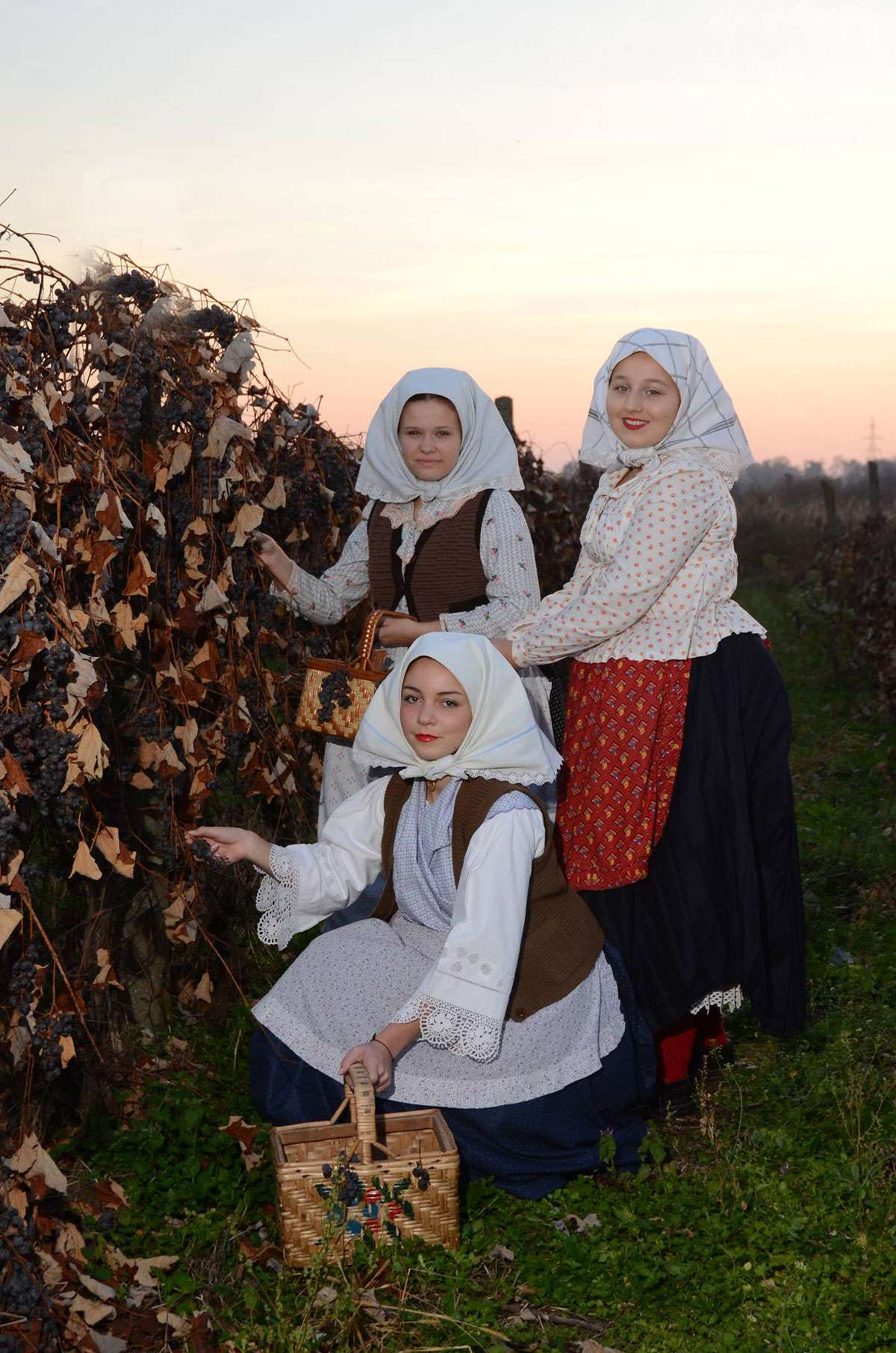"Matea and two other members of KUD ""Tomislav"" ensemble picking grapes in the vineyard in their everyday costume."
