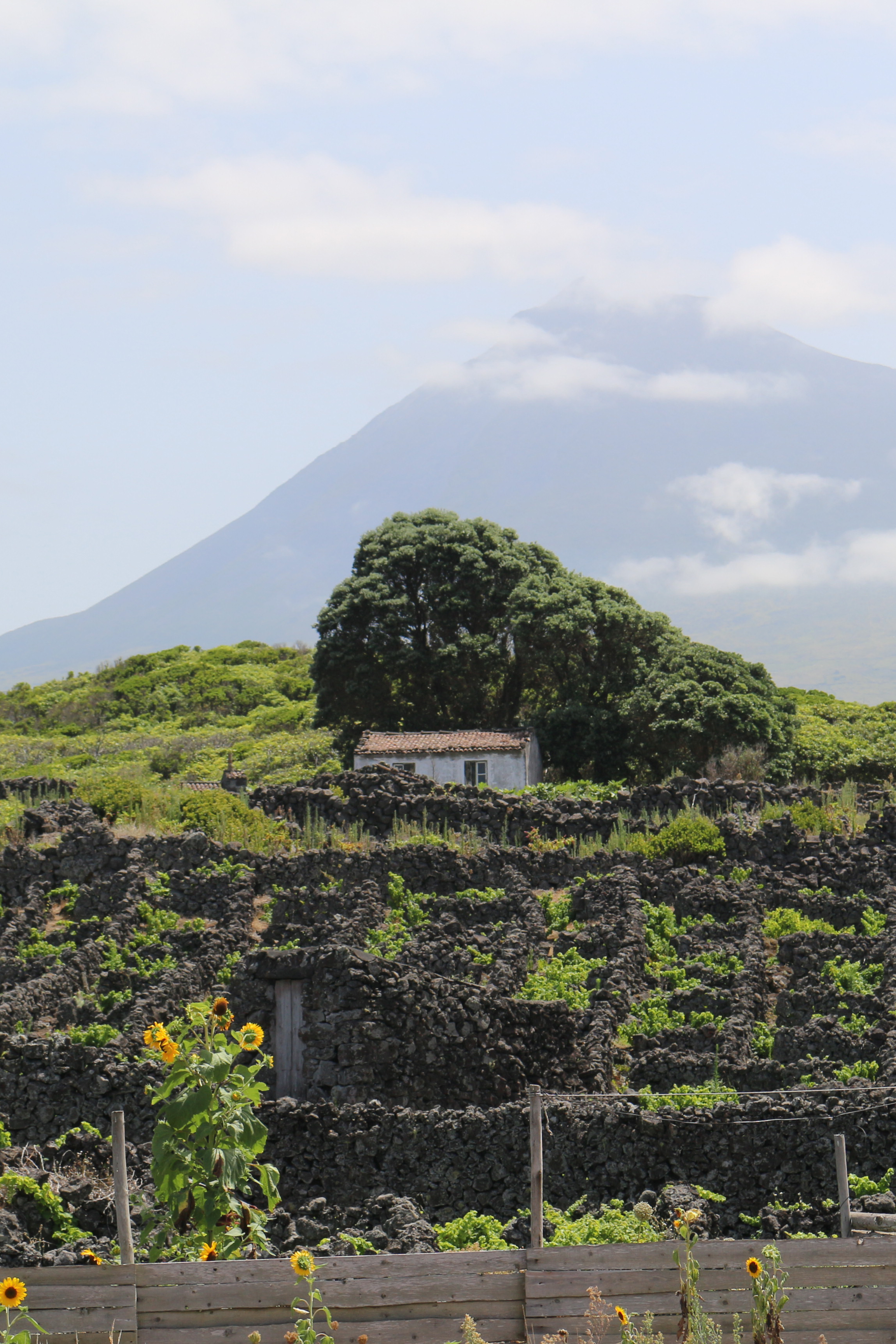Mt. Pico can be seen from any point on the island