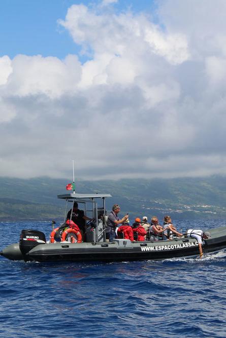 Espaço+Talassa+whale+watching+boat.jpeg