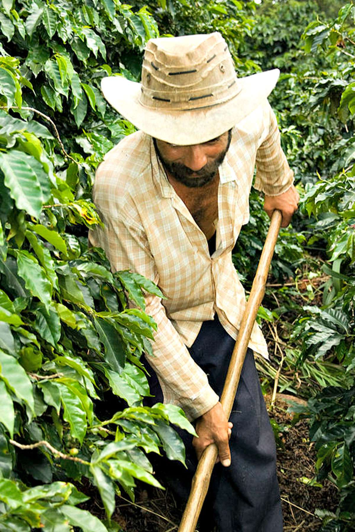 Coffee farmer in Brazil. Credit: Creative Commons