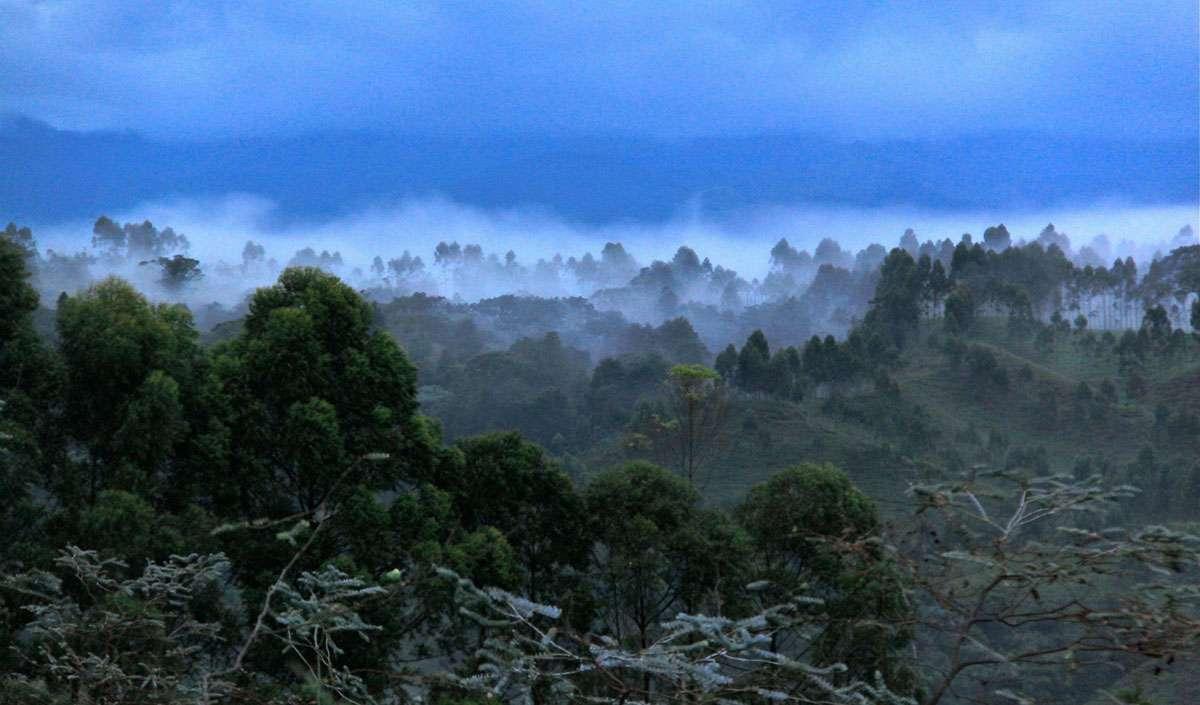 Coffee landscape in Colombia. Credit: Alvaro-Ramírez.