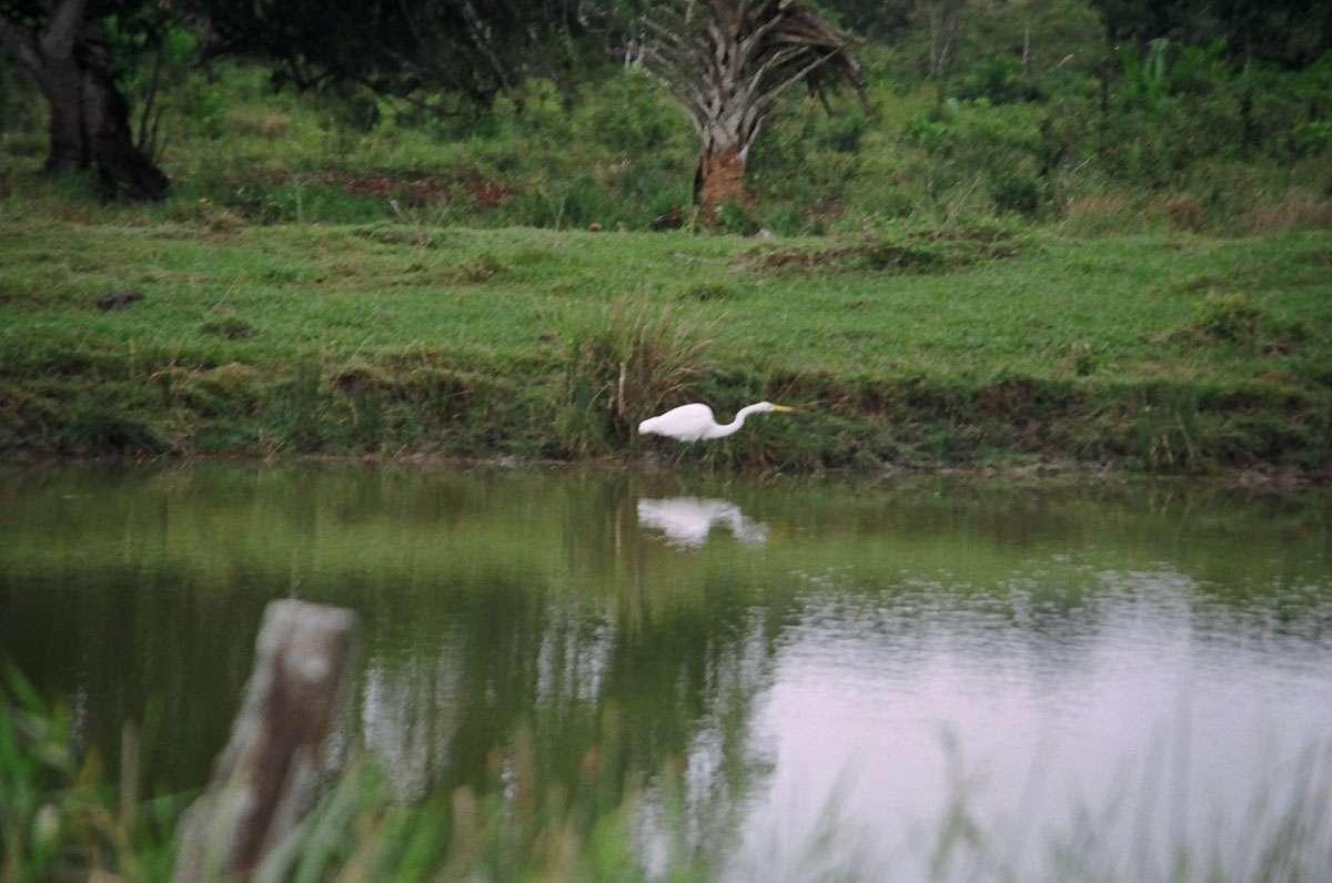 A tranquil moment at Chaa Creek. Photo: Meg Pier
