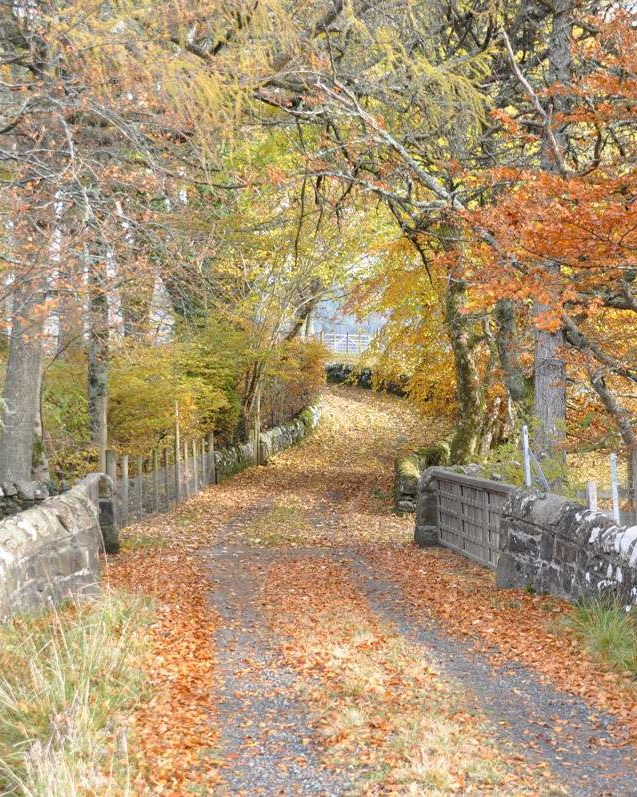 Lovely lane on isle of Mull