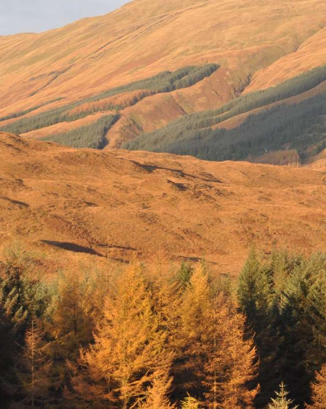 Golden fall light on Isle of Mull