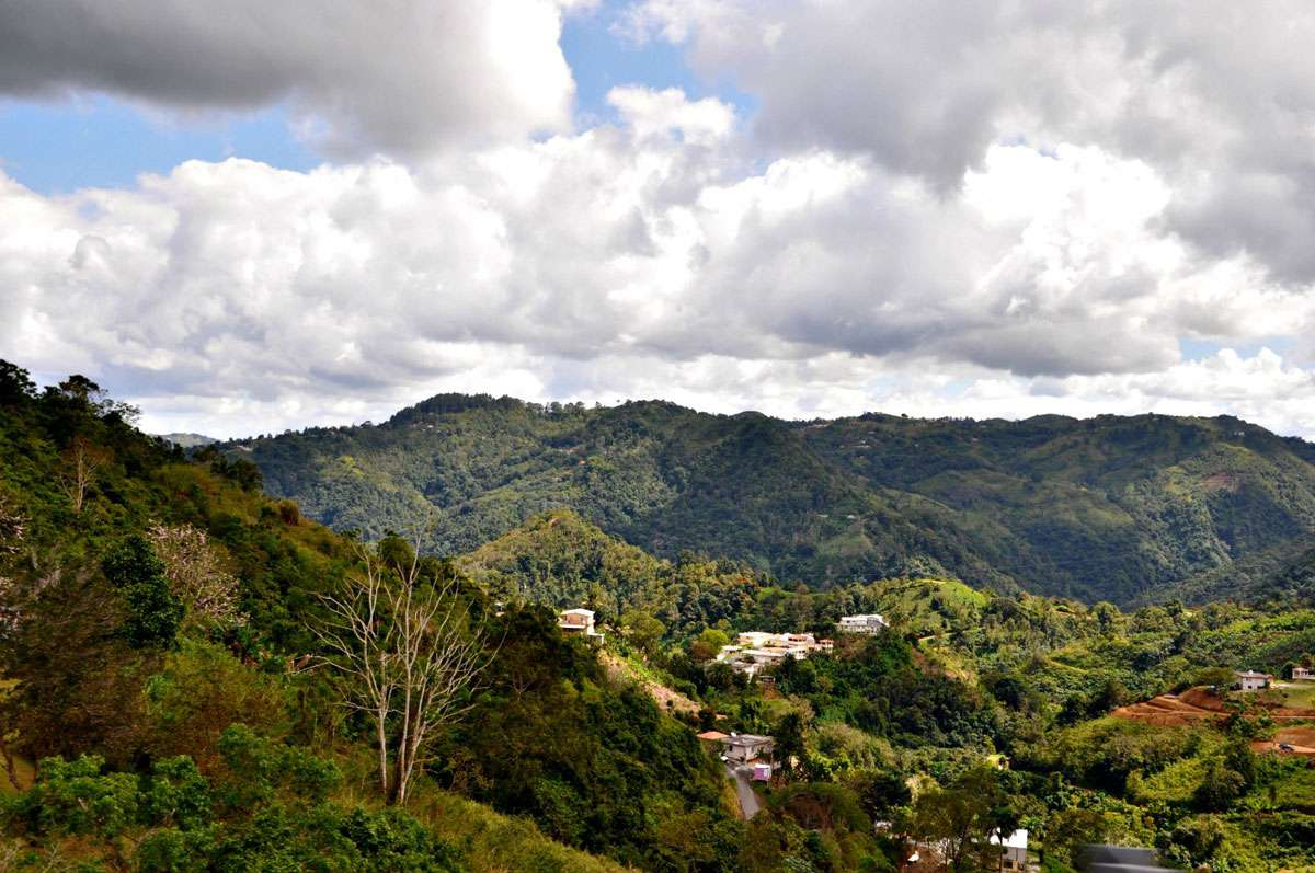 The Cordillera Central Mountains, Puerto Rico's largest mountain range, runs from east to west, and is home to many of the island's coffee plantations. Photo: Meg Pier