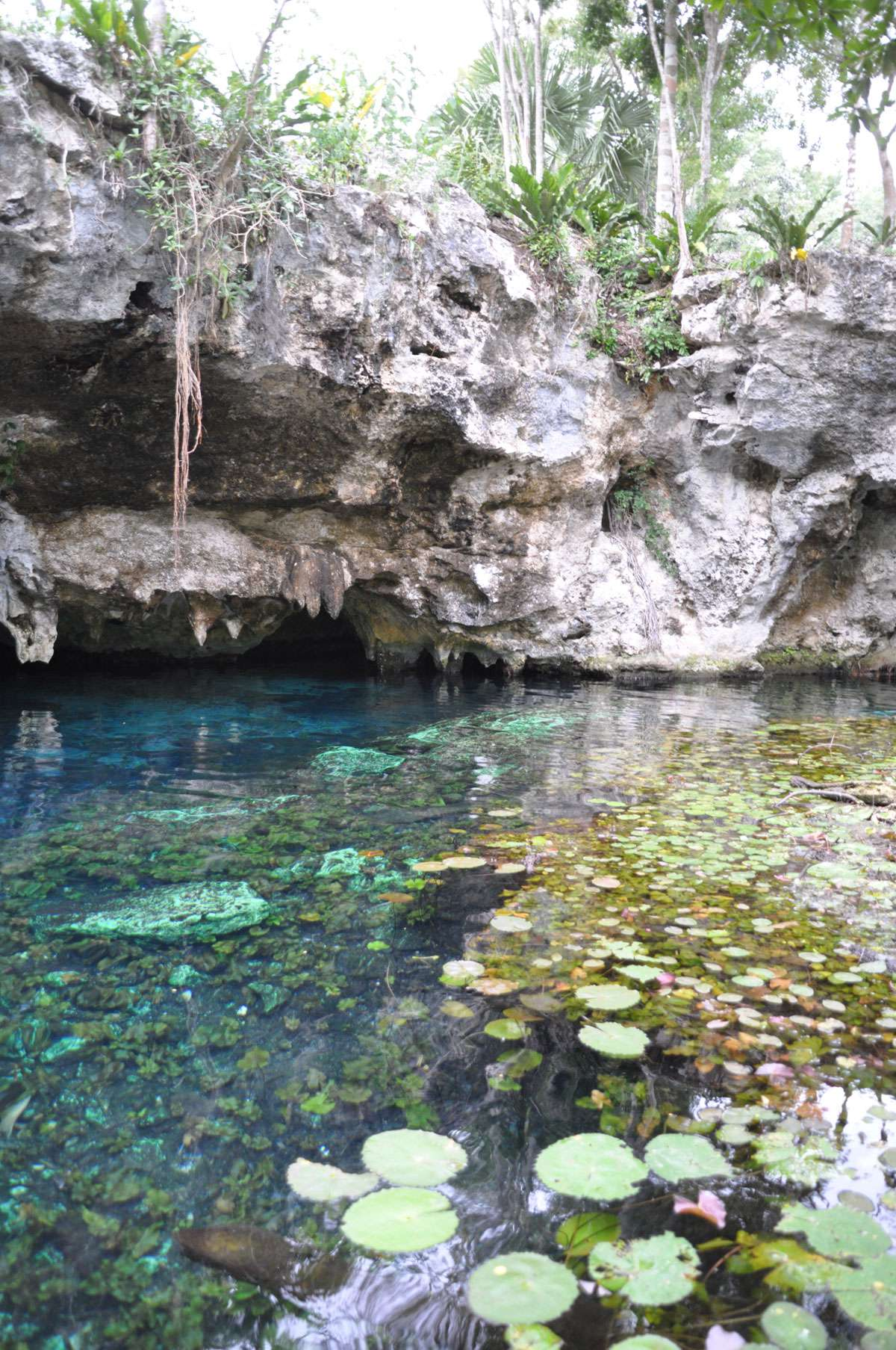 Grand Cenote not from from Tulum