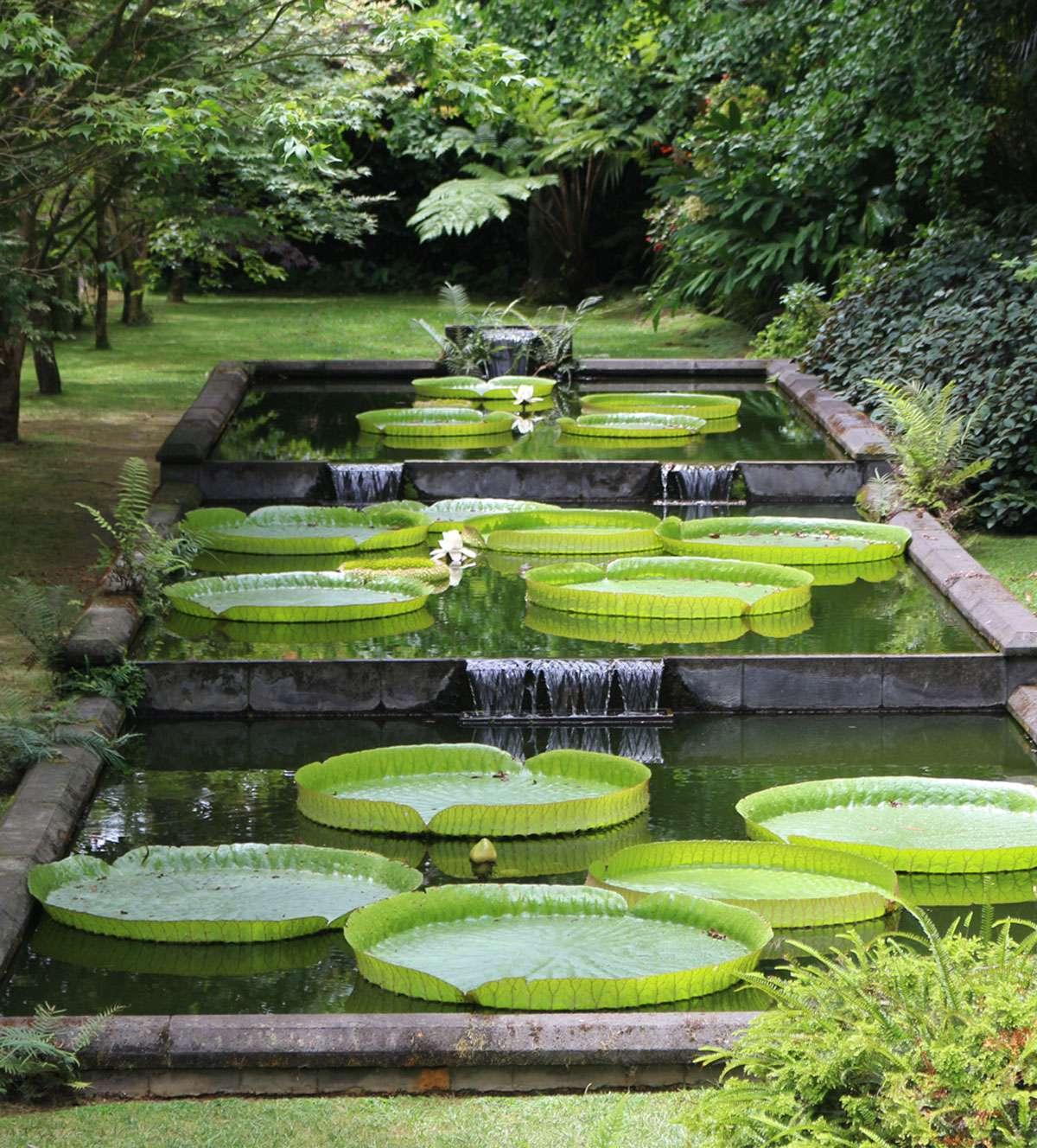 Scenes of Terra Nostra Gardens in Furnas