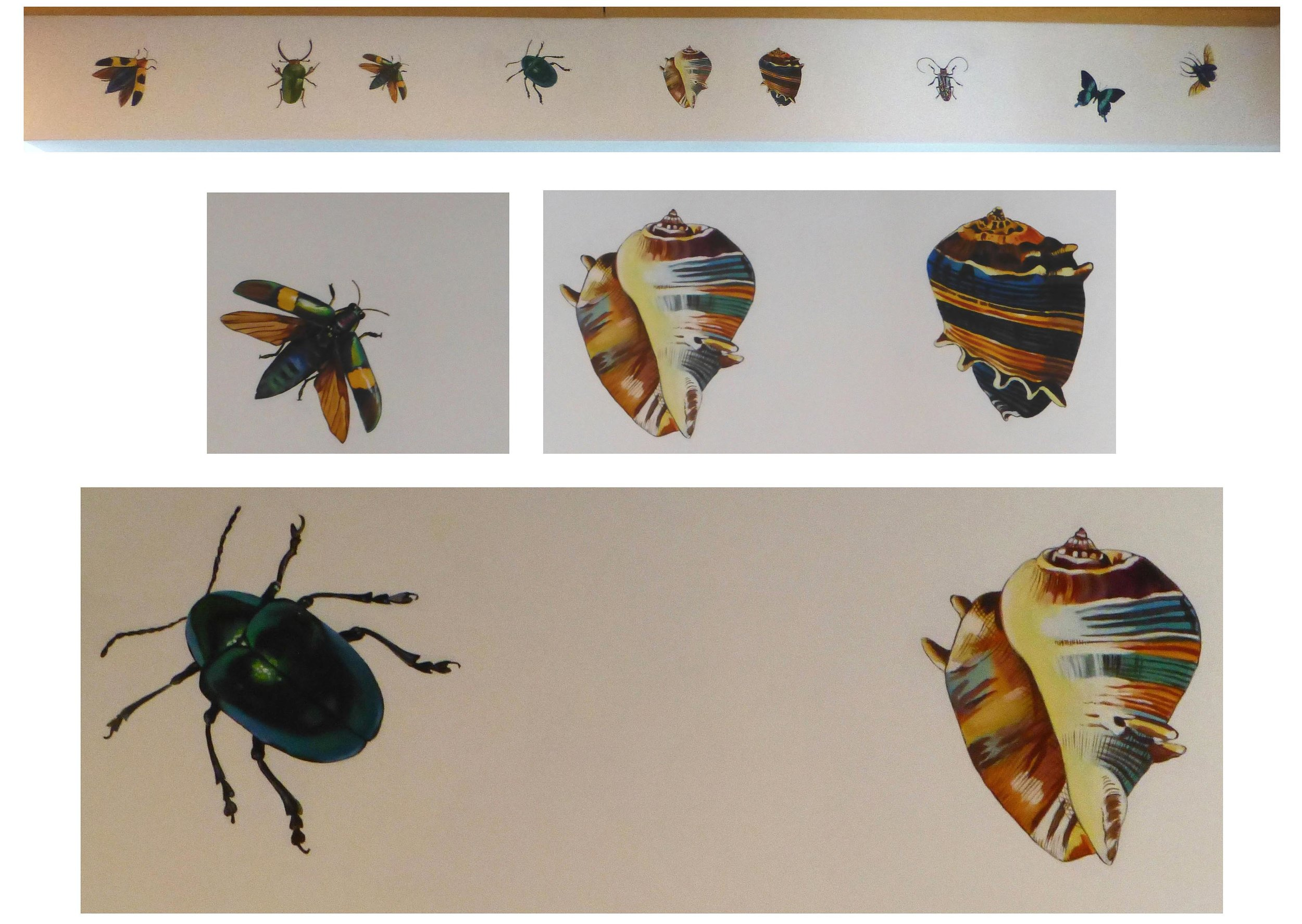 Shells and bugs painted along ceiling adjoining 2 rooms