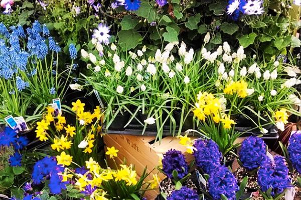 nursery-plantings.jpg