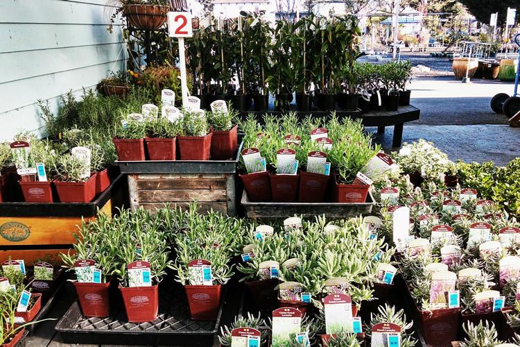 grays-gardens-seasonal-plantings.jpg