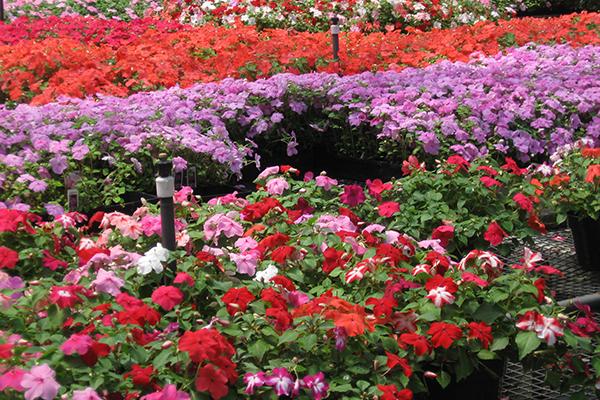 roses-vines-Eugene.jpg