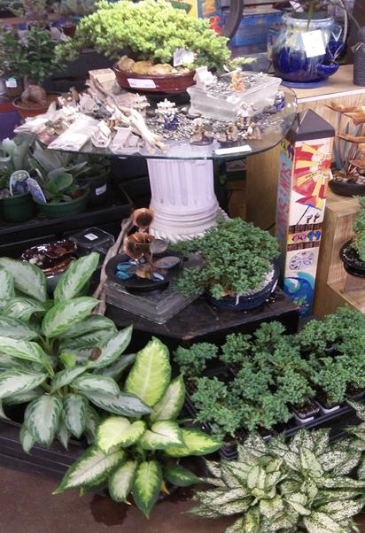 houseplants-succulents-cactus.png