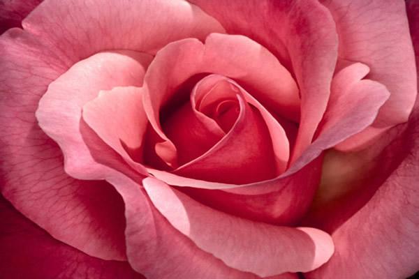 flower-arrangements.jpg