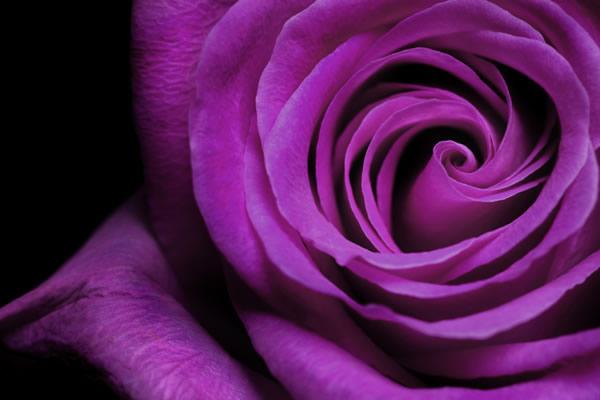 affordable-flower-arrangements.jpg