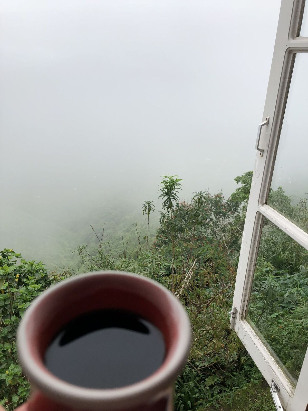 Jamaica - blue mountain coffee.jpeg