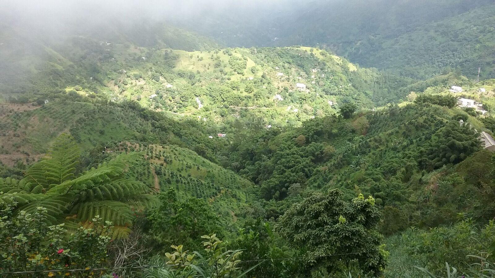 Jamaica - blue mountain coffee3.jpeg