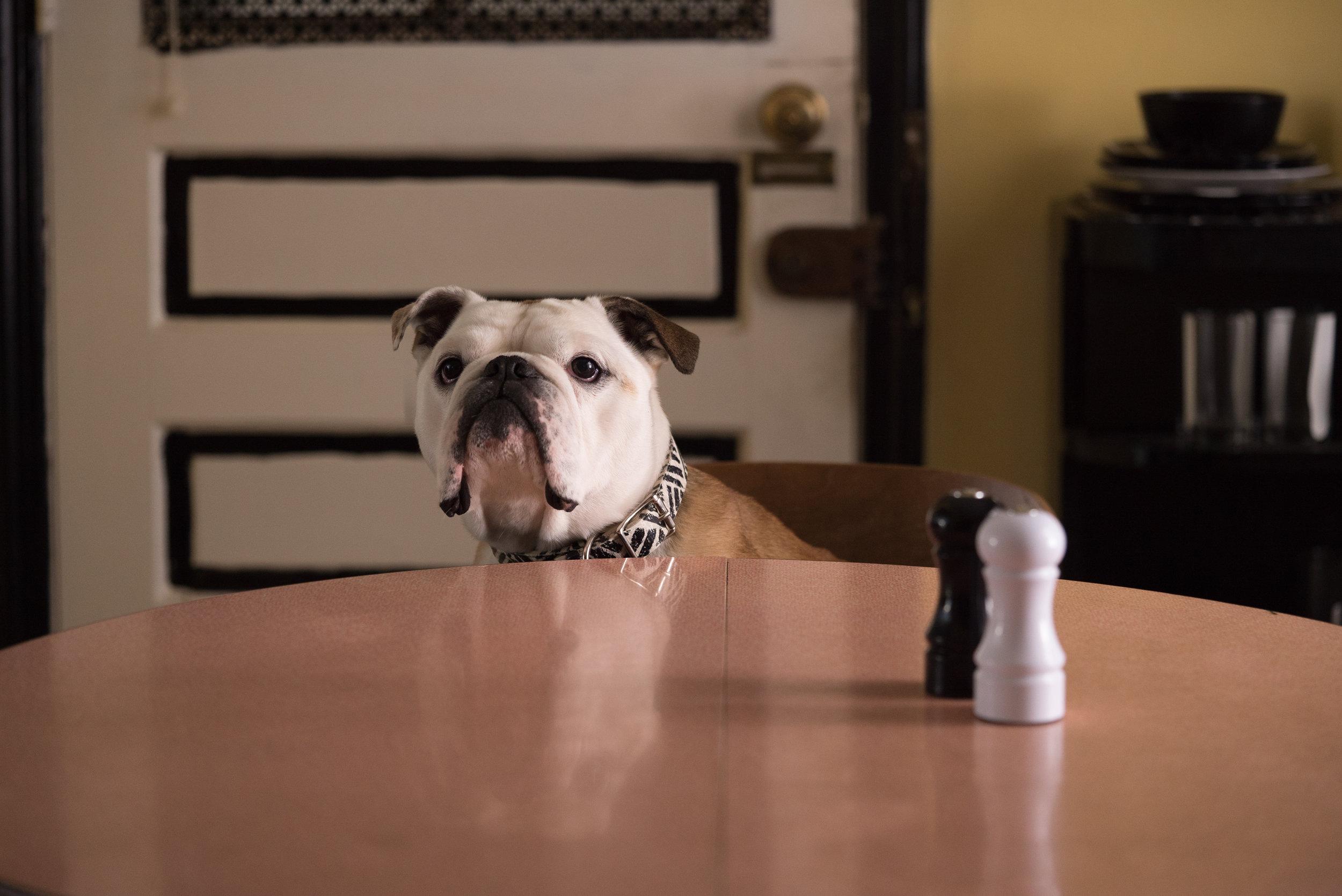 Bulldogen Marvin spiller også en viktig rolle i ekteparet Patersons liv.
