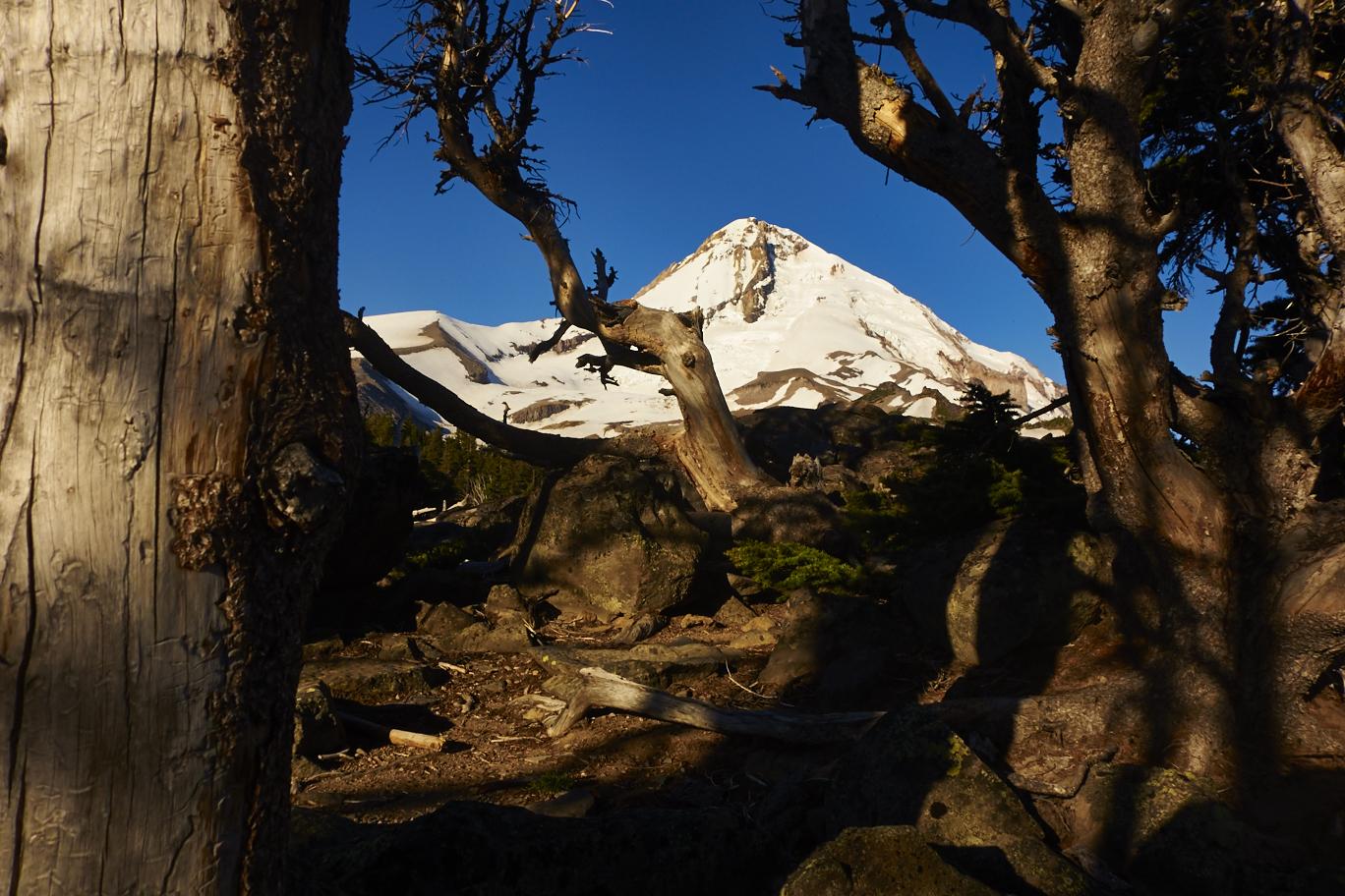 Mount Hood from Cloud Cap