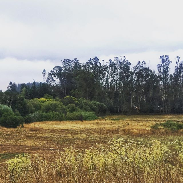Getting to come home to California. It's a very special thing. ✨💖🌿 . #home #arrive #welcomehome #homeiswhere thejeart is #california #westcoast #leftcoast #petaluma #countrylife #backyard #backyard_dreams #returns #transitions #rest #getbacktoit #betterforit #homecoming #homesweethome #field #sonomacounty