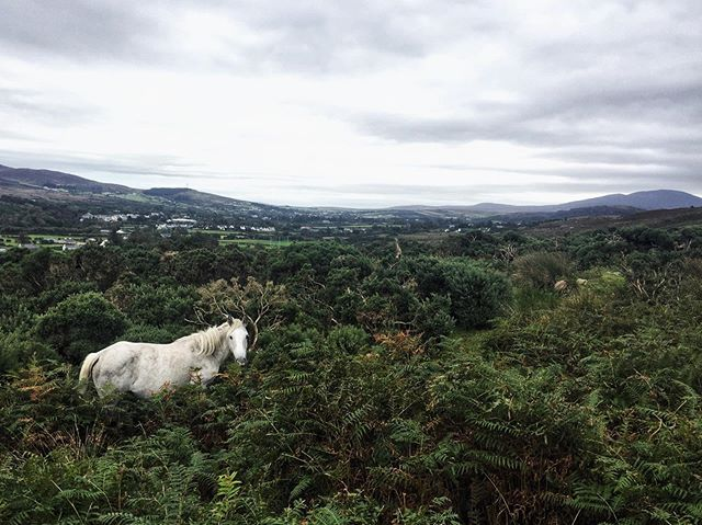 This day. ✨💖🌿 . #irishmagic #getoutside #see #ireland #majesty #horse #wildhorse #hiking #adventure #wanderwoman #beauty #naturalbeauty #memory