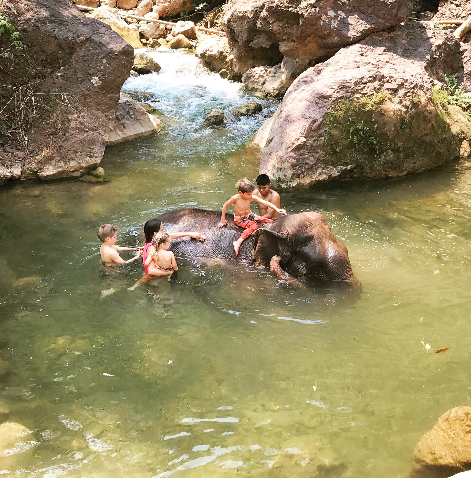 Helping to bathe the rescued and orphaned elephants at a beautiful sanctuary, up in the mountains,in Myanmar.