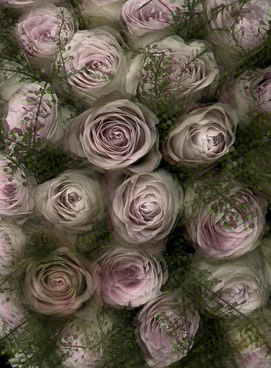 "Paul Solberg, Land of Flowers, 2011, archival pigment print, 21x17"""