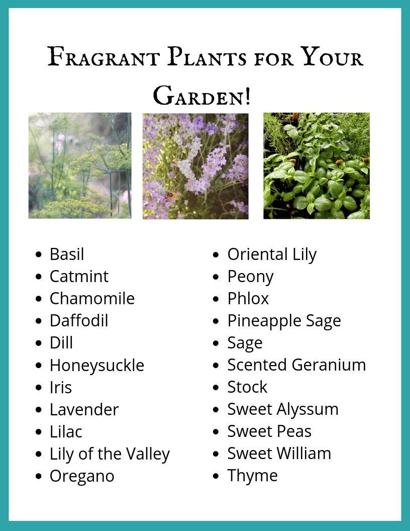 Fragrant Plants to Delight the Senses.jpg