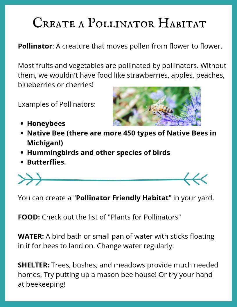 Create a Pollinator Habitat.jpg