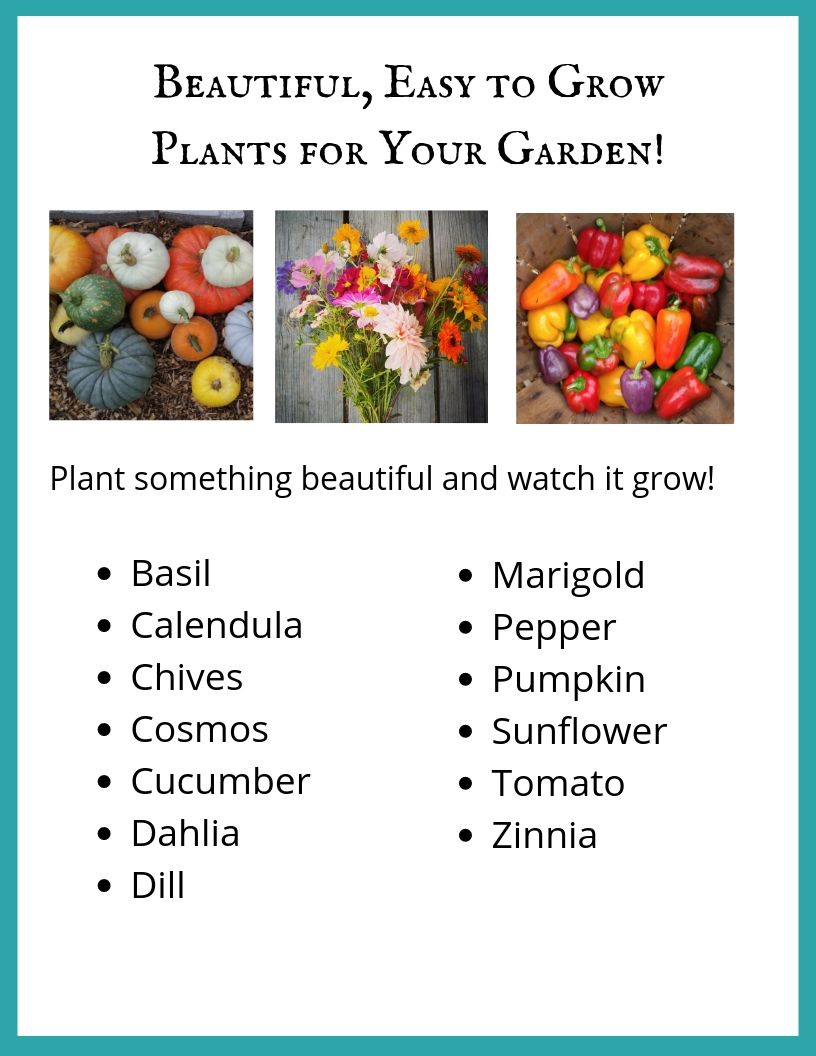 Beautiful Plants for Your Garden! .jpg