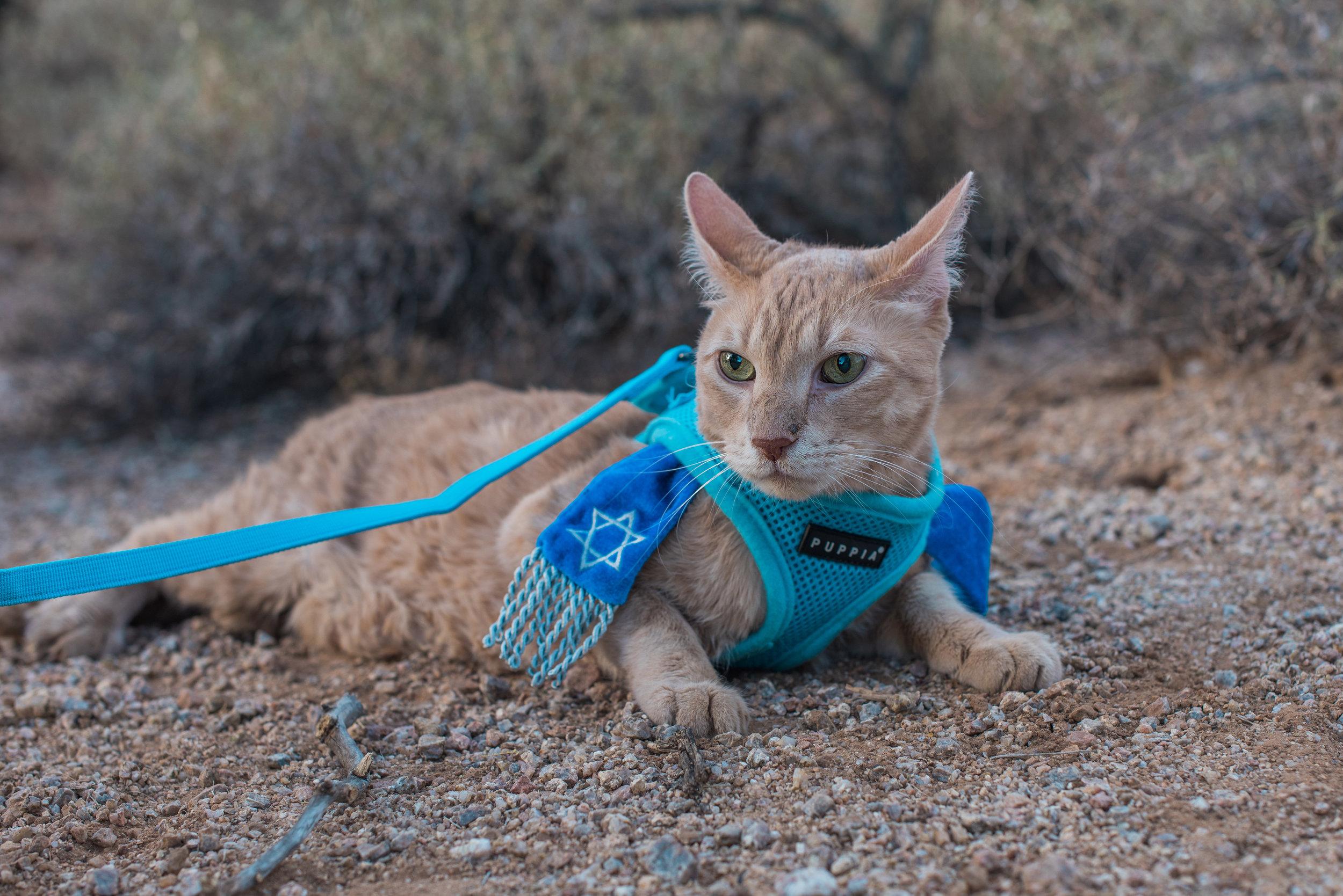 Cat Mitzvah Portraits