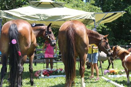 Have a Horse Wedding!
