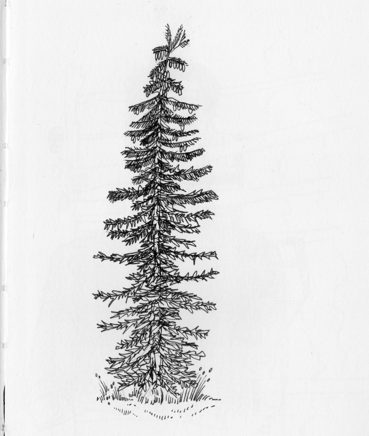 4 Two Style Tree.jpeg