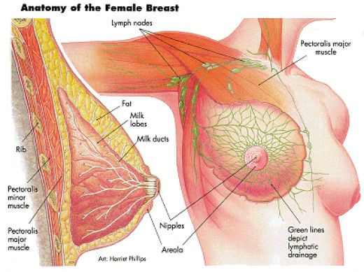 Breast Surgery.jpg