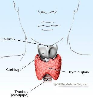 thyroid_gland.jpg
