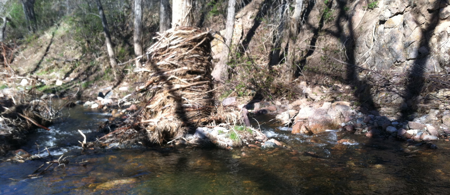 In-channel deposition and flood debris along the Little Thompson River, CO
