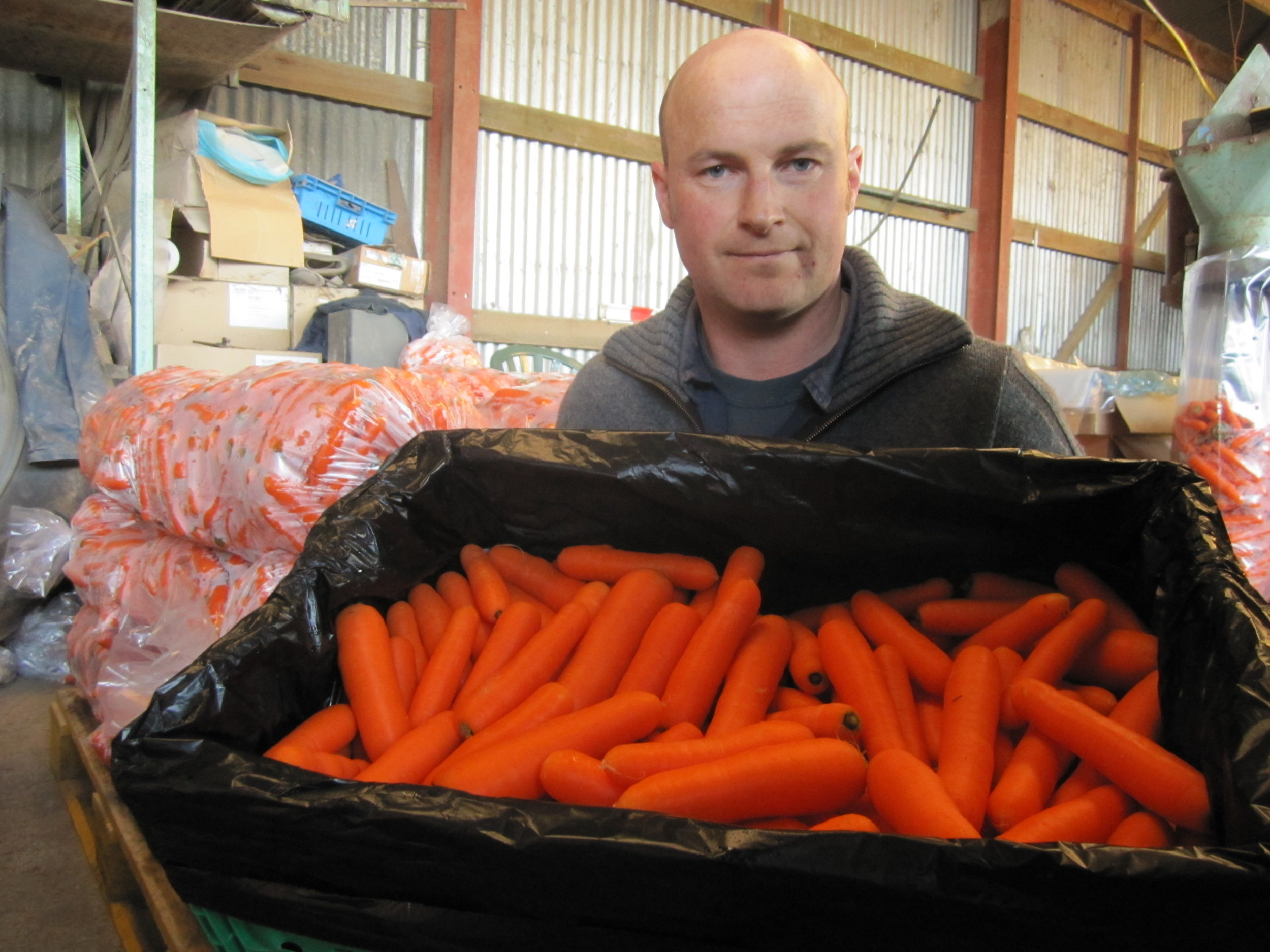 Nigel Greenwood carrot trial with Zelp