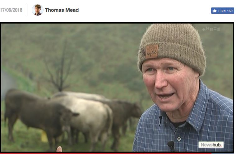 Roger Beattie on News Hub, NZ Kelp, cows