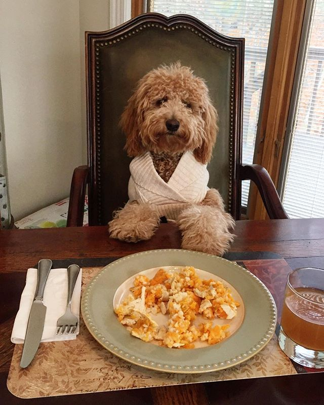 #HappyThanksgiving 🦃🍁🍂 to my family, furiends and followers! #ImThankful for all of you! Now, excuse me while I go eat my special thanksgiving meal... I might have a food baby after today!🍖🍗🧀🍞🍝🍾