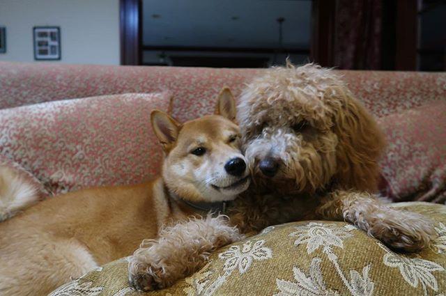 Cuddling with my buddy @hayhayitsaj 🐻#cuddleseasonxthompsonhotels