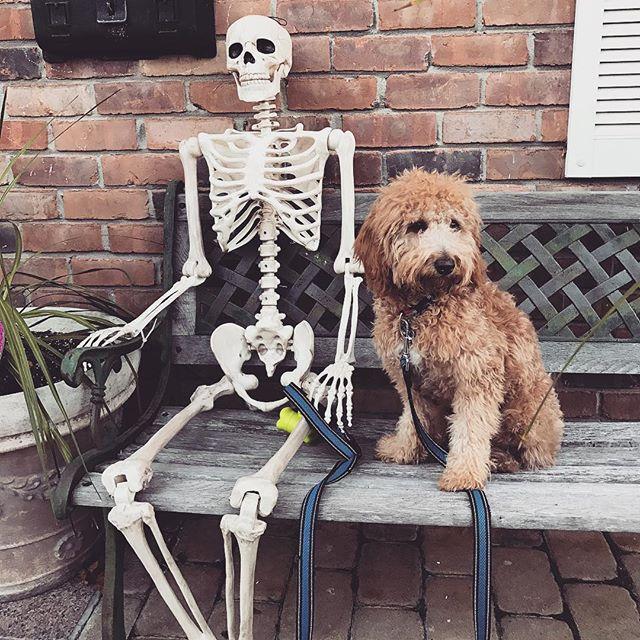 Waiting for my human to walk me like...#HappyHalloween