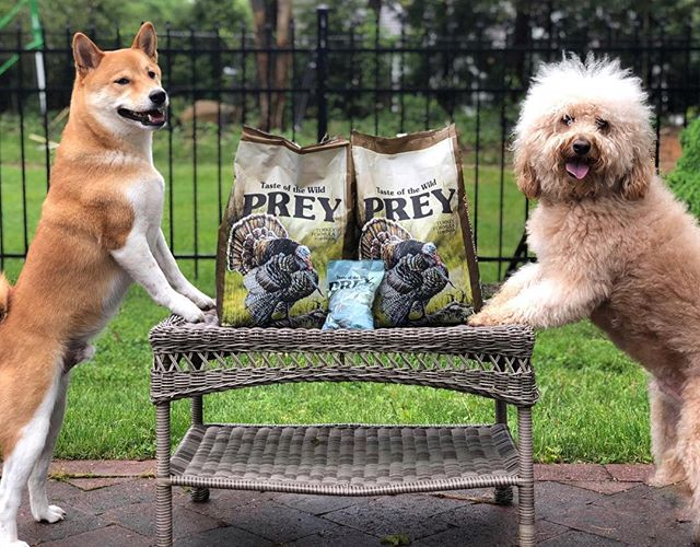 Click the link in our bio to learn why we switched our kibble to @tasteofthewild #tasteofPREY #TOWpartner #sponsored #izea