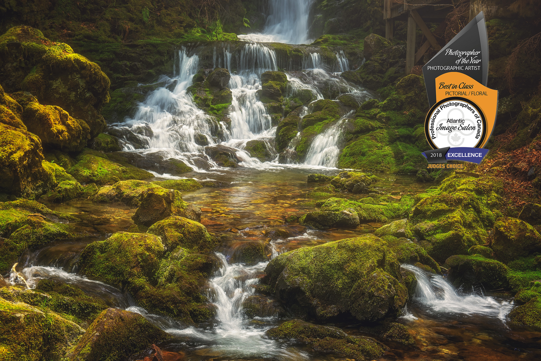 "My image ""Enchanted"" shows Dickson Falls in  Fundy National Park, NB . It scored excellence and won the Bruce Berry award for Best Overall Image, Best Pictorial/Floral, and a Judge's Choice Award."