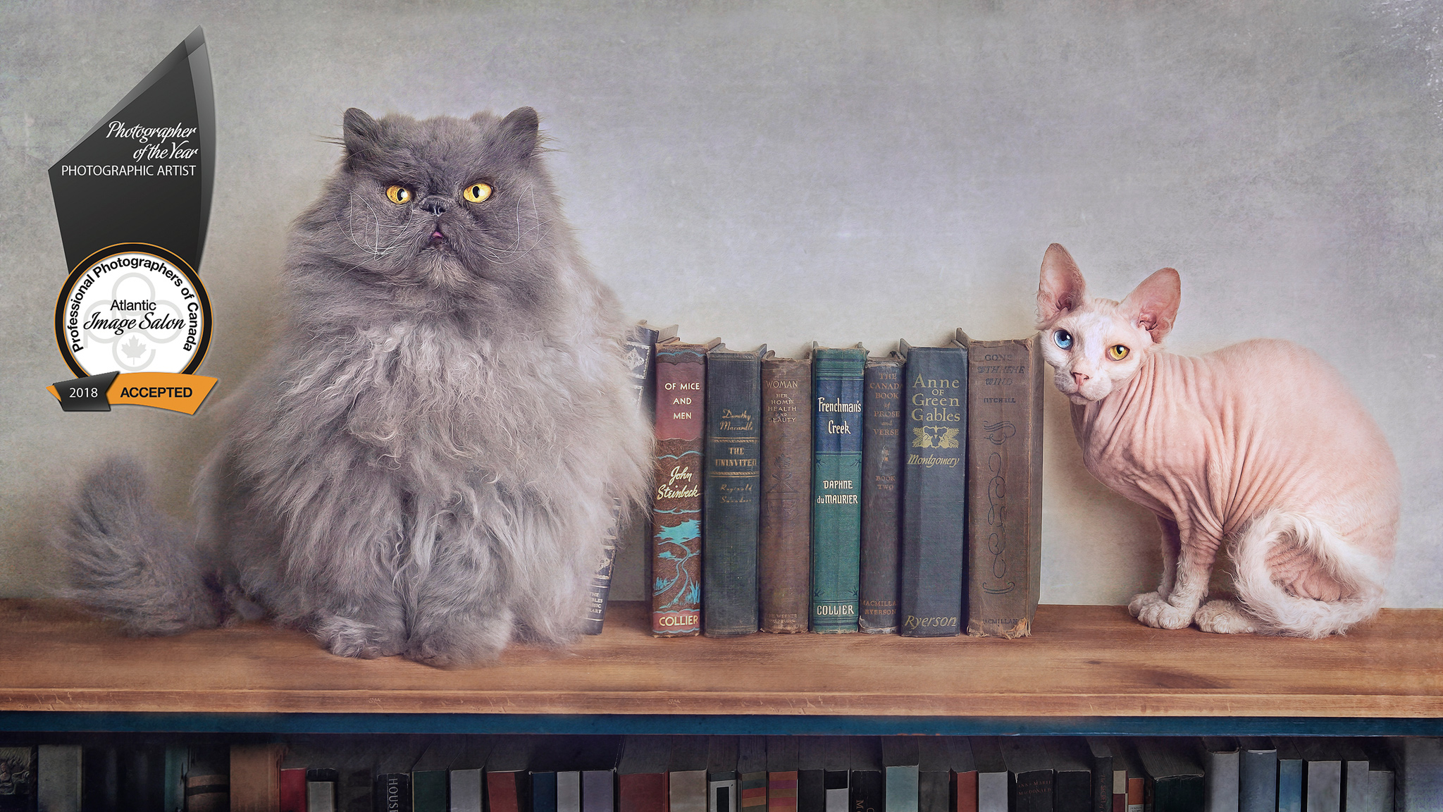 "Last, but certainly not least, my ""Bookends"", Stompin' Tom (Persian) and Trillian (Sphynx). Their portrait now hangs proudly above that same bookshelf."