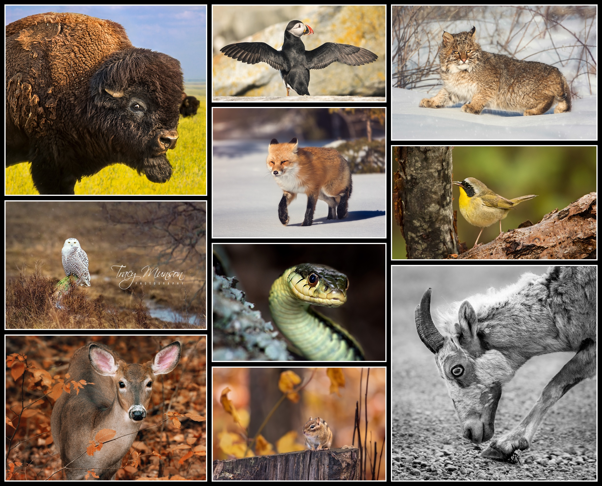 These are the 10 images that made up my successful Wildlife Accreditation submission.