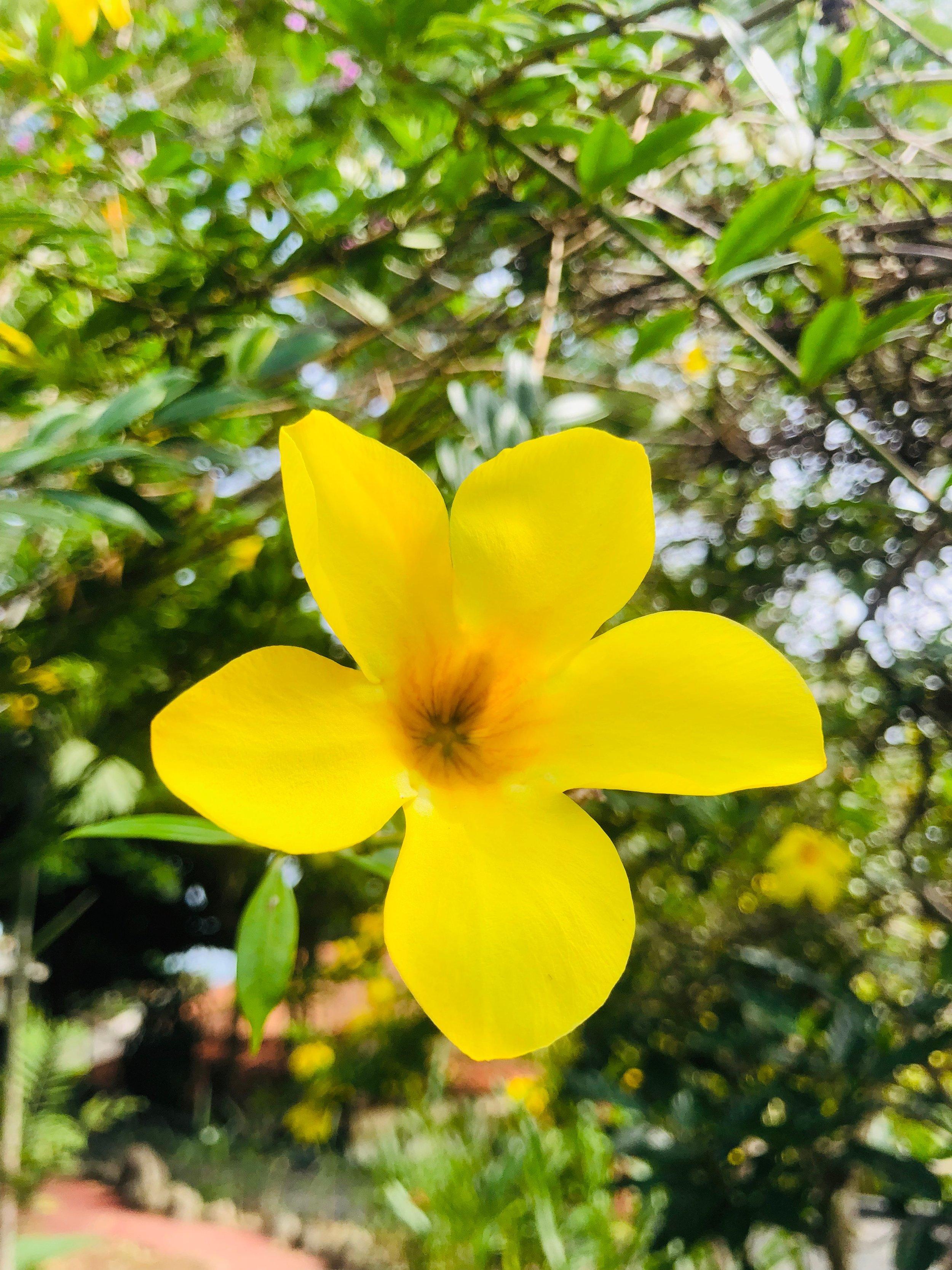 Flowers Costa Rica @yoga_ky