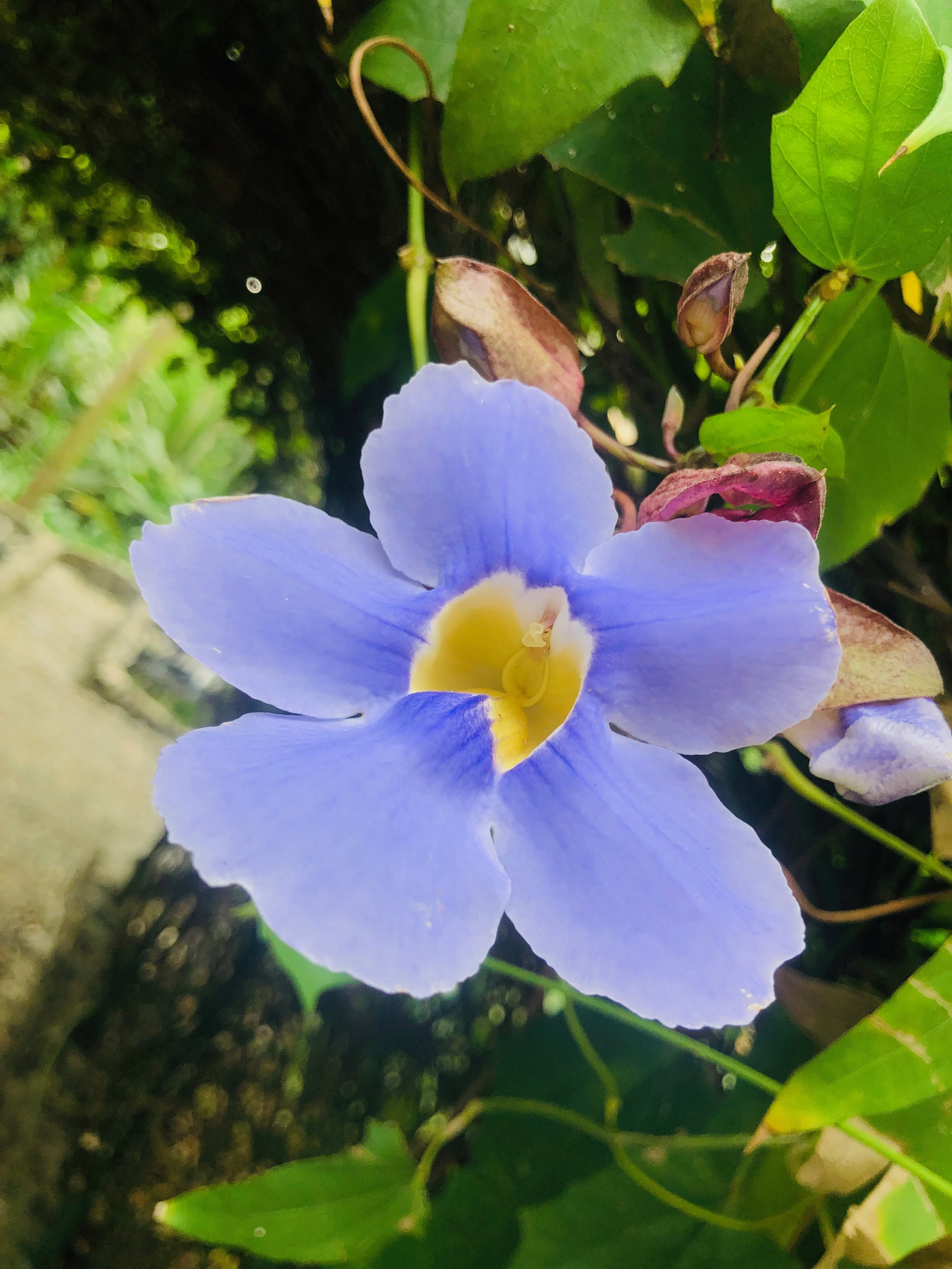 Flowers: Parador Resort Costa Rica