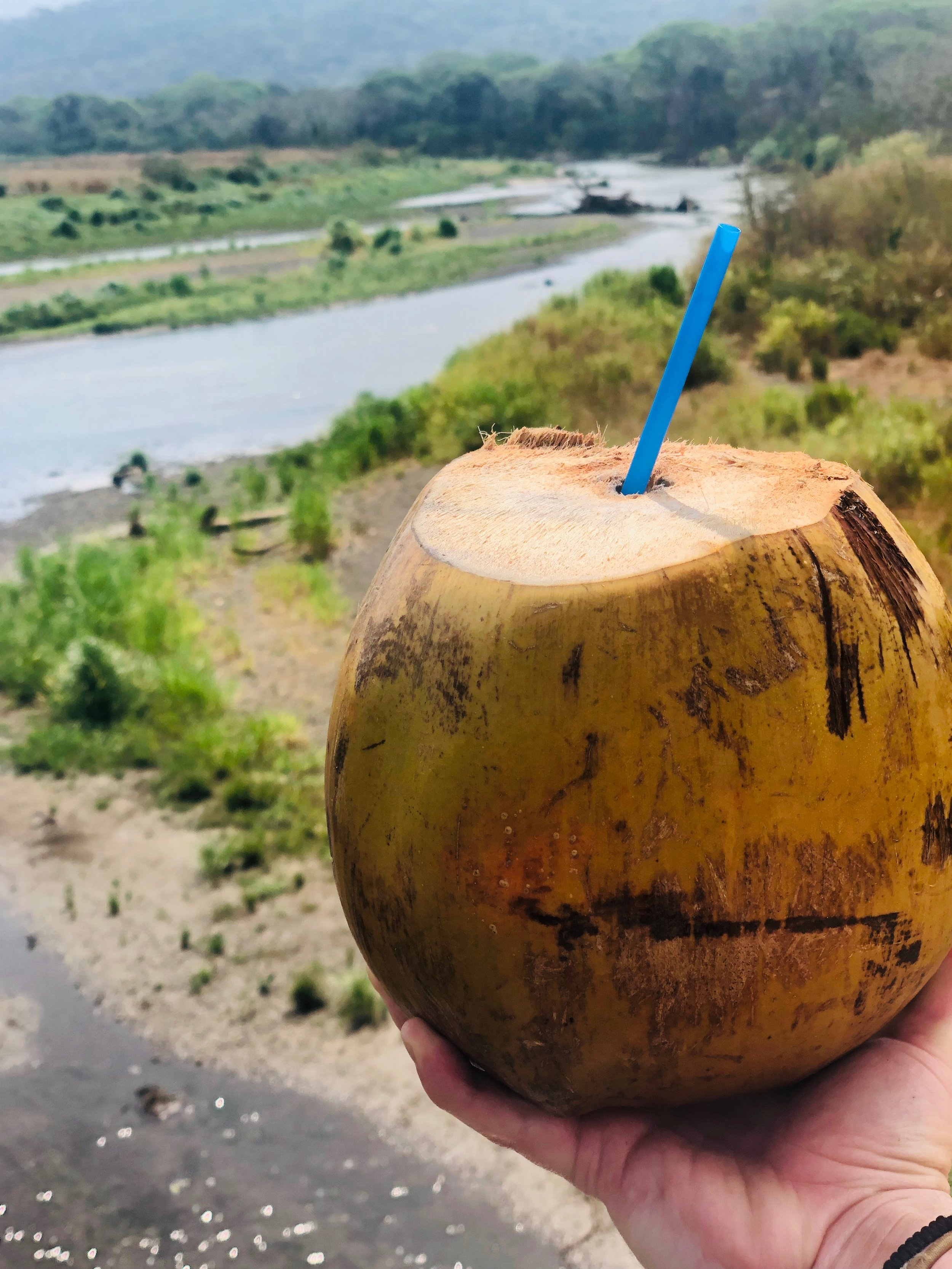 Coconut Time at Crocodile Bridge