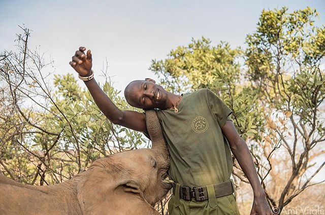 Mike Learka receives affection from Nadasoit, an eight month old elephant who was orphaned due to the drought. Mike, a Samburu warrior, is one of the incredible keepers at Reteti Elephant Sanctuary (@r.e.s.c.u.e), the first ever community owned and run elephant sanctuary in all of Africa. While providing a home and nuturing young, orphaned elephant calves so they can one day return to the wild, the sanctuary is also leading a transformation in the way humans relate to wild animals. All work by @amivitale supports @r.e.s.c.u.e with 100% of the proceeds from print sale going to the sanctuary. #bekindtoelephants #DontLetThemDisappear @nrt_kenya @tusk_org @conservationorg @kenyawildlifeservice #saveelephants #stoppoaching #everydayafrica #amivitale #coexistthemovement