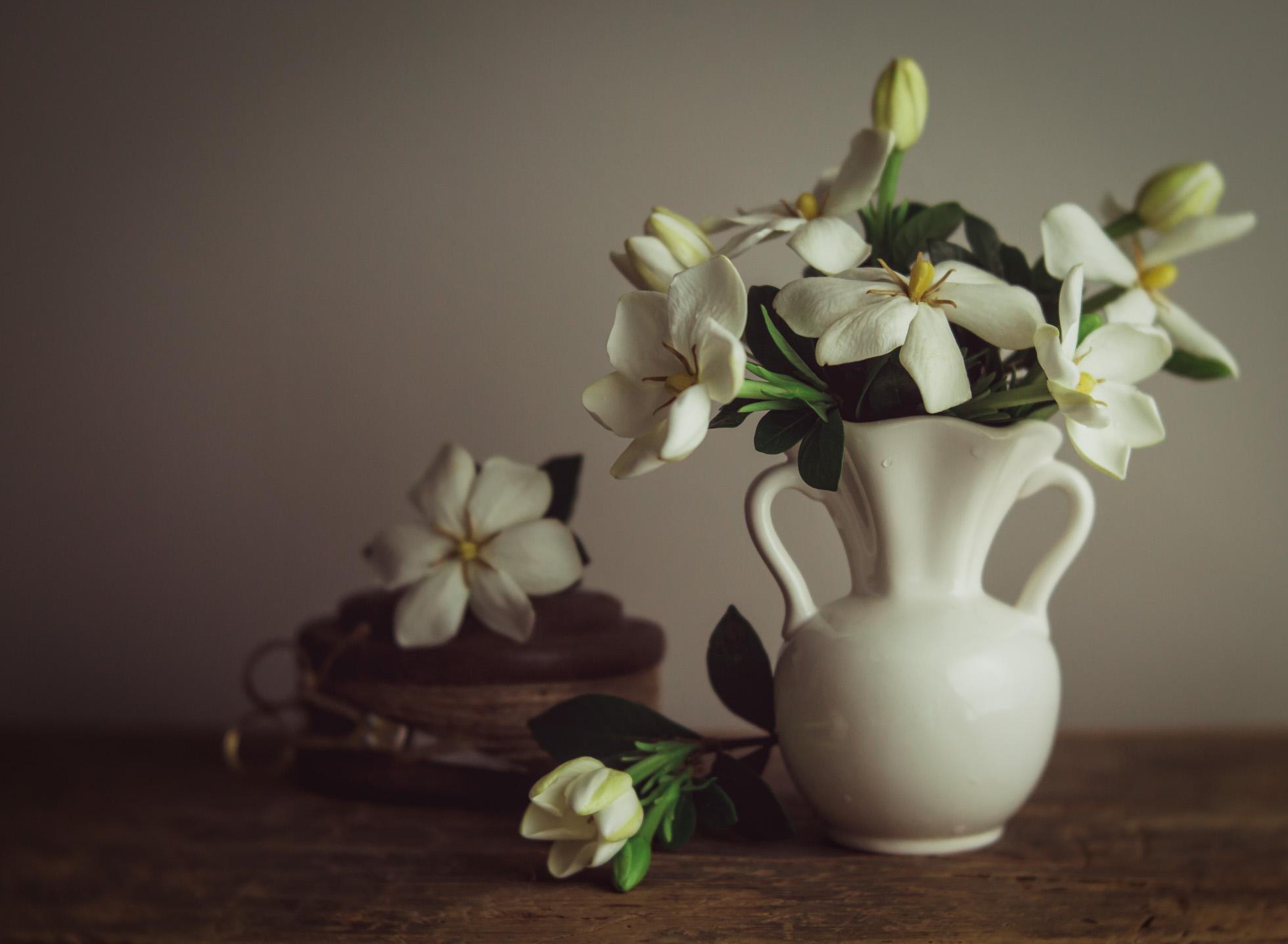 Daisy Gardenia
