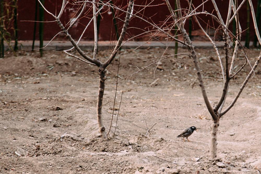 birdbeijing-1.jpg
